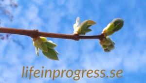 lifeinprogress.se